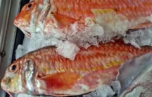 pescado_fresco_chiringuito_rincon_de_la_victoria